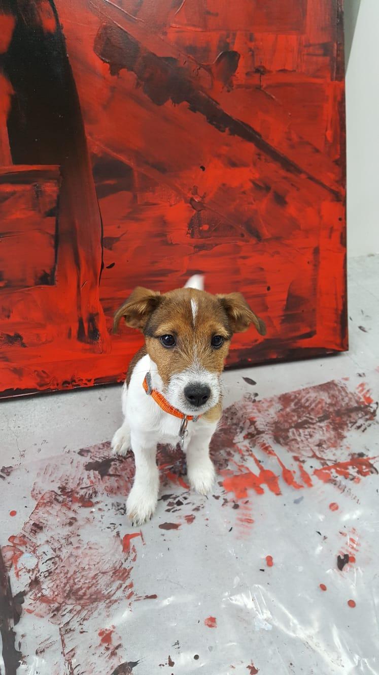 Studio Pup